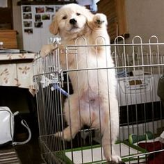 ♥, puppy trying to break out of his cage.