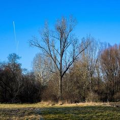 【dcz.tamas】さんのInstagramの写真をピンしています。《The meadow behind my grandparent's home with the tree planted by my grandpa #meadow #hometown #childhoodmemories #nature #hungary #hometownglory #nikon #d610 #80200 #匈牙利 #冬 #故郷 #自然 #大自然 #空青い #森 #林 #木 #老家 #爷爷奶奶家 #想念 #我国 #termeszet #rét #kékég #kóka》