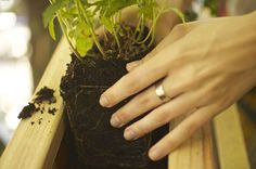 Tips for planting your own herbs! Dreamerly: Herbology 101