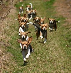 Beagles! Look out you're about to get snuggled to death! Protect your food!!! :-D