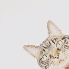 * * ママ? 僕はいつだってママの味方だよ。 * #キジトラ#キジトラ部#保護猫#猫#ねこ #ねこら部 #love#lovecats#猫との暮らし#暮らし#olympuspen#余白#余白の美 * #IGersJP#cat#cats#kawaii#olympus #ふわもこ部#ねこ部#愛猫#にゃんだふるらいふ #にゃんすたぐらむ#猫のいる暮らし#みんねこ *