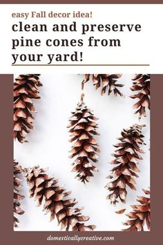Yes, you CAN save those pine cones from your yard to use for Fall and Christmas crafts and decor. Check out this tutorial to learn how to clean pine cones and preserve them for future use!  #pinecone #pineconecraft #christmascrafts #fallcrafts #domesticallycreative Christmas Pine Cones, Christmas Greenery, Christmas Crafts, Christmas Ideas, Christmas Markets, Christmas Stuff, Holiday Ideas, Pine Cone Decorations, Christmas Decorations