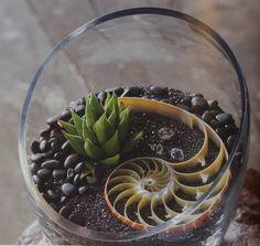 shell terrarium