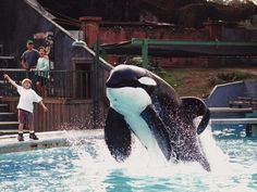 Movies: Free Willy