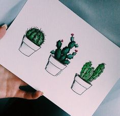 Little cacti in pots #plants #cactus #cacti #pot #green