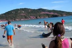 This is #amazing and #inspiring! Brazilian beachgoers rescue an entire pod of stranded dolphins.