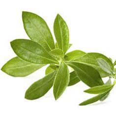 Plantes aromatiques aromatic plants on pinterest - Plantes aromatiques cuisine ...