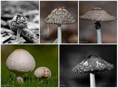 The area caters for all tastes. Even mushrooms. These were taken in a forest in Swellendam Bird Feeders, Catering, Stuffed Mushrooms, Outdoor Decor, Home Decor, Stuff Mushrooms, Decoration Home, Catering Business, Room Decor