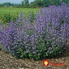 Stačí len zasadiť a s kliešťami máte pokoj: Odkedy mám v záhrade túto rastlinu, deti sa môžu pokojne hrať na tráve! Plants, Garden, Hydrangea, Outdoor