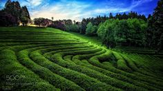 Green field by TigerSeo. Please Like http://fb.me/go4photos and Follow @go4fotos Thank You. :-)
