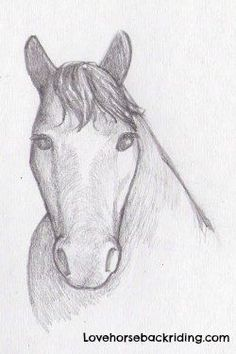 How to create a horse head drawing using pencil step-by-step - Easy and Cartoon Horse Drawing Tutorials - First Time Horse Owner Information - Natural Riding Tips and Techniques