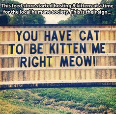 I said right meow!
