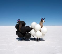 Llamas & Balloons We unveil our favourite post on AnOther Loves, and interview its Lover — June 20, 2014 —