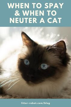 Justine Lee, veterinarian on When To Spay & When To Neuter a Cat Cancer In Cats, Alley Cat Allies, Litter Robot, American Animals, Cute Animal Pictures, Cat Breeds, Animal Shelter, Things That Bounce, Cat Lovers