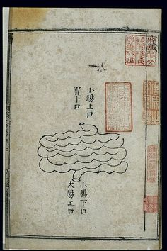 File:Anatomy of the small intestine in ancient Chinese medicine Wellcome L0037817.jpg
