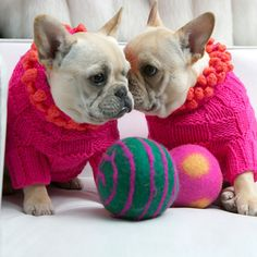 Now I don't really like dogs in sweaters... but I'm a sucker for pom poms! ...and French bulldogs ;)