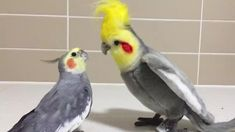 Funny Birds, Cute Birds, Pretty Birds, Beautiful Birds, Animals Beautiful, Funny Bird Pictures, Cute Animal Photos, Cute Little Animals, Cute Funny Animals