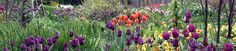 Stonecrop Gardens - in Cold Spring, in the Hudson River Valley, with public display gardens and short courses on topics like bulb planting and trough gardening