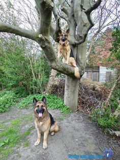 `Don't look now, but there's a dog in your tree.