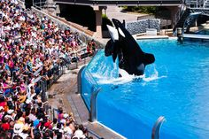The stunning shamu show in San Diego Sea World . You can not miss it.