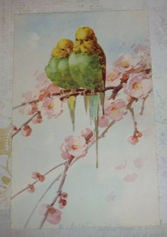 C. Klein, 12/3 Two Yellow and Green Parakeets on