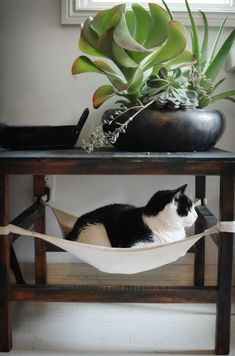 Kitty hammock - if you look carefully, you will see that the cat is facing a window. So place the table/hammock near a low window to keep kitty content for hours, soaking in rays and watching the world go by. Crazy Cat Lady, Crazy Cats, Cat Furniture, Plywood Furniture, Furniture Projects, Furniture Design, Outdoor Furniture, Outdoor Decor, Cats And Kittens