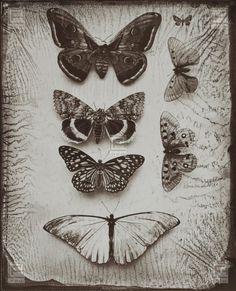 """""""Schmetterlinge"""", 2-farbiger Lichtdruck"""