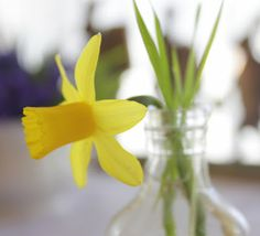 love daffodils