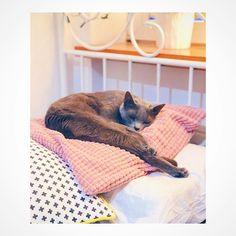 """Polubienia: 230, komentarze: 15 – Marcelina x Workshop (@marcelinaworkshop) na Instagramie: """"Pancia Ty juz idz do pracy a ja popilnuje poduszki i kaloryfera 😂😘 #instacat #catsagram…"""""""