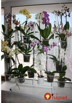 Namiesto toho, aby dali kvety do obyčajných črepníkov, vymysleli niečo omnoho lepšie: Teraz okolo nich nikto neprejde bez povšimnutia! Orchid Planters, Orchids Garden, House Plants Decor, Plant Decor, Water Culture Orchids, Garden Center Displays, Orchid Leaves, Orchid Show, Growing Orchids