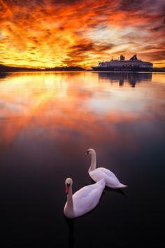 Swan Lake, Oslo, Norway