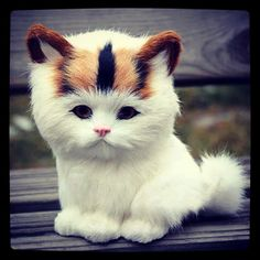 How is it even possible to be this cute? #adorablekitten #meltmyheartcute