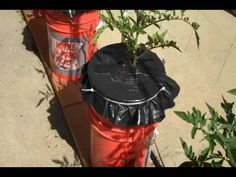 How To Grow Amazing Vegetables Easily With Cheap Plastic Buckets -