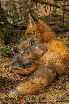 Mother Fox and Kits Photo by steve dunsford — National Geographic Your Shot is part of Animals beautiful - steve dunsford posted this picture to National Geographic's Your Shot photo community Check it out, add a comment, share it, and Nature Animals, Animals And Pets, Baby Animals, Funny Animals, Cute Animals, Beautiful Creatures, Animals Beautiful, Fuchs Baby, Photo Chat