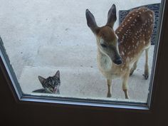 """Someone let the fawn in!..oh and the cat"""