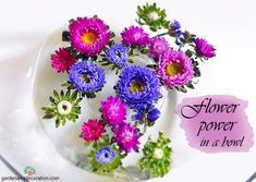 Colourful asters in a bowl. A quick tip how to surround yourself with flowers - even on holidays. #DIY #flowerlover #travelling #floraldesign Diy Flowers, Fresh Flowers, Some Ideas, Flower Power, Flower Arrangements, Travelling, Floral Design, Holidays, Color