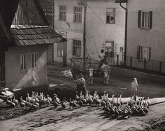 Martin Martinček - Ráno v Liptovskej Tepličke A Wrinkle In Time, Carpathian Mountains, Old Photography, Old Images, Folk Music, Socialism, Kinds Of People, Mountain Landscape, Czech Republic