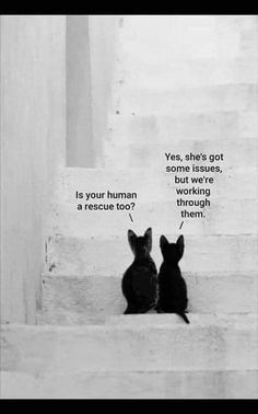 Adoption Issues - World's largest collection of cat memes and other animals Cute Funny Animals, Cute Baby Animals, Animals And Pets, Cute Cats, Funny Cats, Crazy Cat Lady, Crazy Cats, Cat Memes, Cat Art