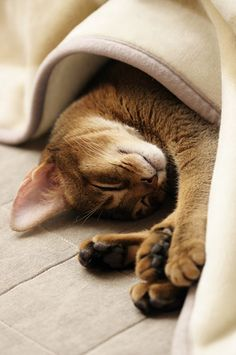 sleeping_cat_5666