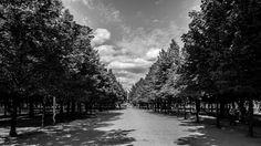 Jardin de las Tullerias   by V. Shiguiyama