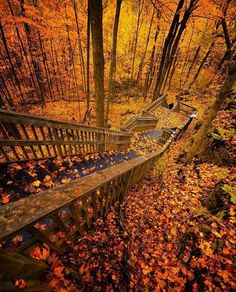 [New] The 10 Best Travel Ideas Today (with Pictures) - Mono Cliffs Provincial Park Ontario Canada. Photo by: Foto Nature, All Nature, Ontario Travel, Autumn Scenery, Excursion, Fall Pictures, Canada Travel, Hiking Trails, Belle Photo