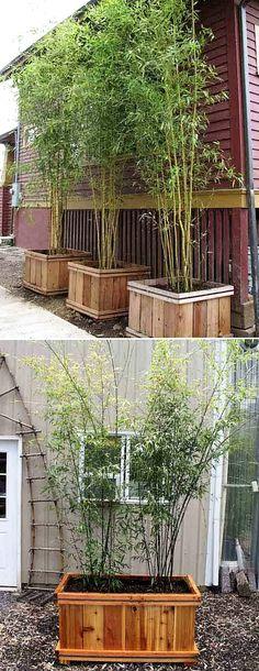 Jardineras o macetas de bambú #HogarTecnocasa