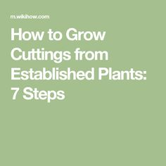 How to Grow Cuttings from Established Plants: 7 Steps