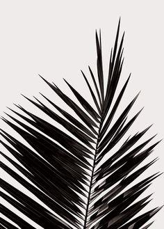 ~ minimalism ~