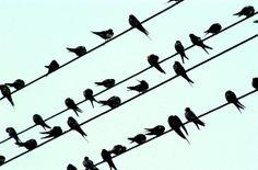 1 zwaluw maakt nog geen zomer? maar er hangt wel muziek in de lucht.