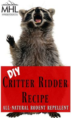 DIY Critter Ridder Recipe- Natural Rodent Repellent - My Homestead Life - Animals wild, Animals cutest, Animals funny, Animals drawings Raccoon Repellent, Insect Repellent, Bees And Wasps, Pest Management, Ideias Diy, Humming Bird Feeders, Buggy, Garden Pests, Garden Insects