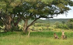 Makweti Safari Lodge is ideally positioned to explore the entire Welgevonden Game Reserve on the open safari vehicles accompanied by the professional game rangers. Game Lodge, Close Encounters, Game Reserve, Lodges, South Africa, Safari, Wildlife, Explore, Pictures