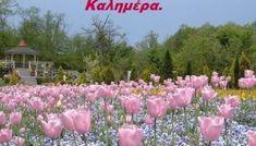 Εικόνες καλημέρα με ροζ λουλούδια - eikones top Sky Hd, Green Trees, Hd Wallpaper, Wallpapers, Dolores Park, Floral, Flowers, Plants, Pink