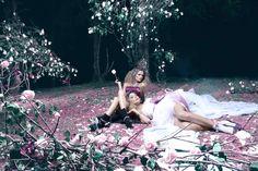 RosaTonic en un bosque de rosas