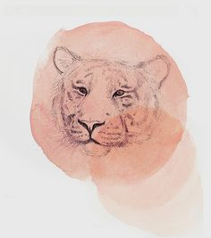 Illustration & Drawing / Pink Tiger / #illustration #drawing #pink #tiger #ink